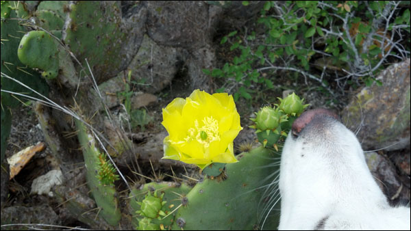 Pretty cactus flower!