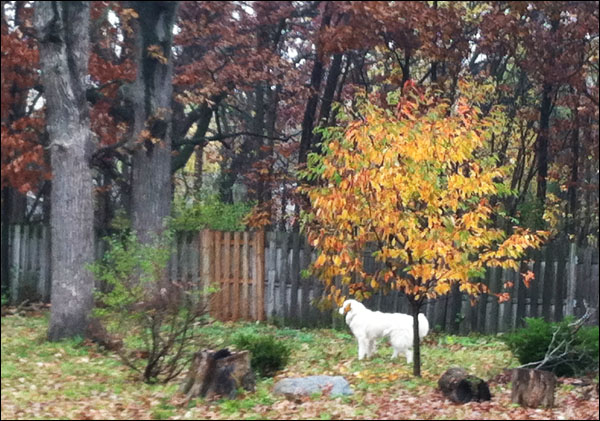 Pyr in Autumn